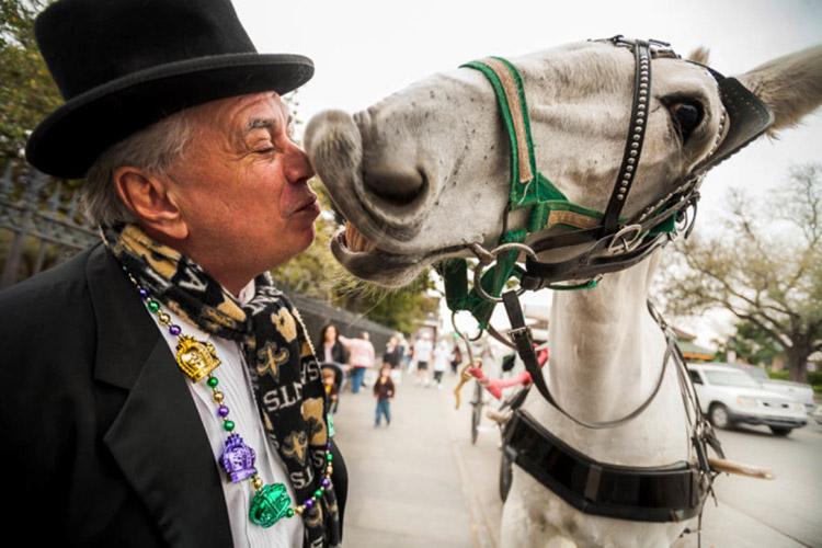 horse-kiss-2